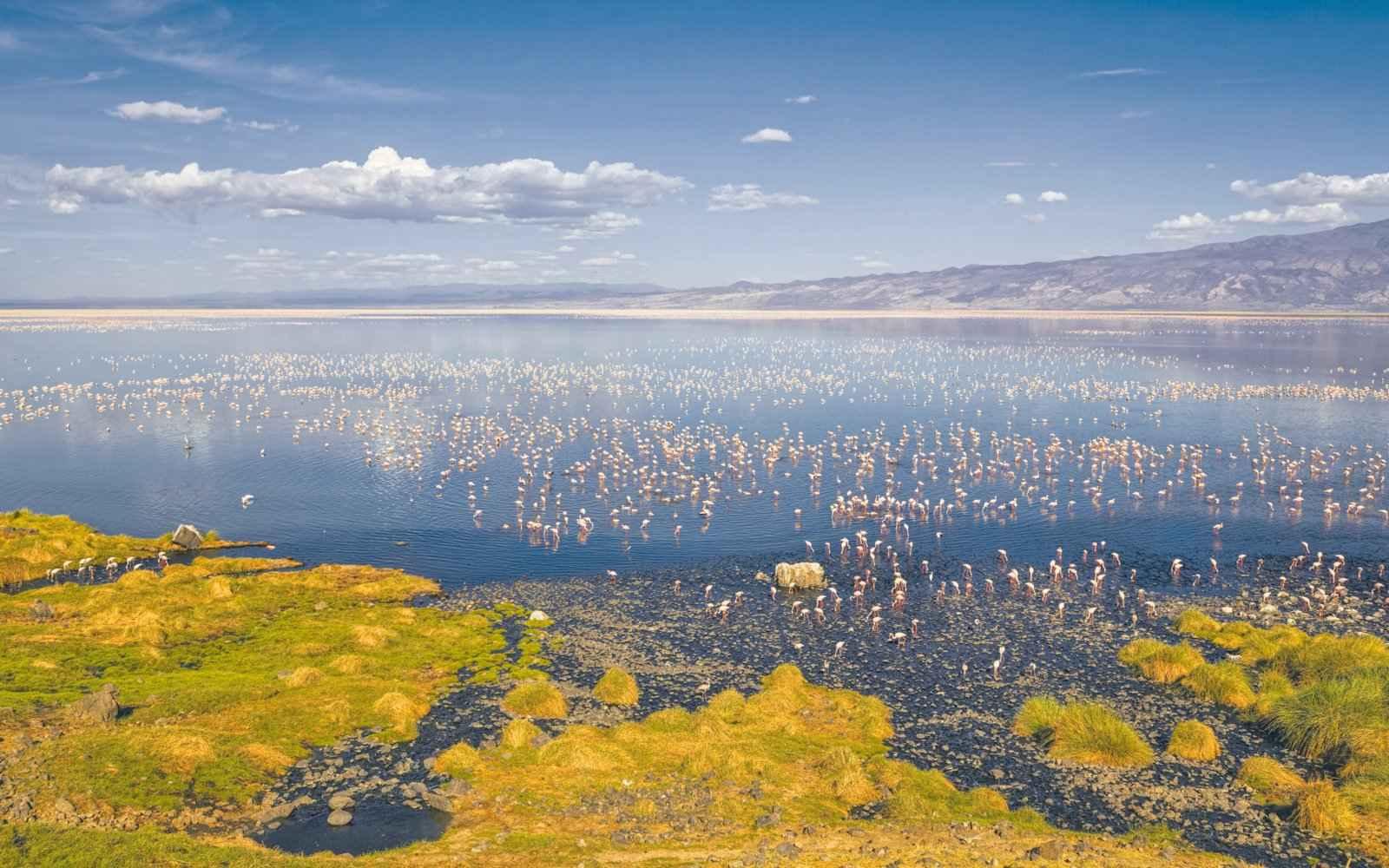 nortron - دریاچه ناترون یا گورستان مخوف پرندگان!